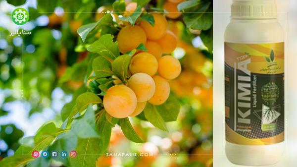 کود افزایش تعداد میوه