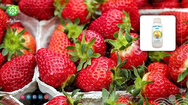 کود افزایش شیرینی میوه